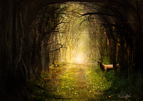 Hidden Pathway by oddmountain