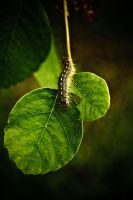 A bugs world v2 by EvanHodsonGallery