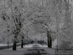 Winter Avenue - Germany, Winter 2017 by TheFunnySpider