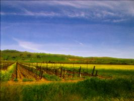 Vineyards 2 by Surf-cat