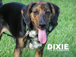 Dixie by Quality-RB