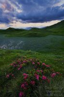 Mountain Meadows by Dave-Derbis