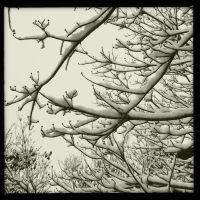 Snow branches by sailrjup12