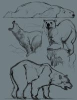 polar bears by jhnyv