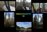 Goldstream Park Photos by WonderSparks