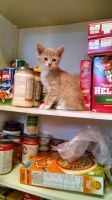 Cupboard Kitten by BlackSpiralDancer1
