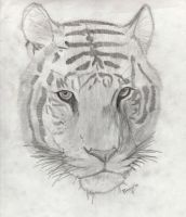 Tigre by Pipenagos