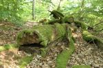 Mossy log Stock 14 by Malleni-Stock