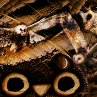 .owl collage. by wingdream