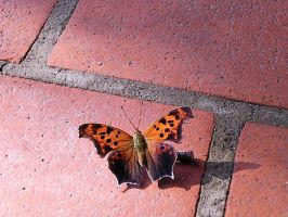 Butterfly on Brick 4 by Stocks-Effulgent