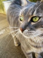 my lovely cat by k1nley