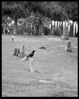 Cemetary Crows - BW by shelly349