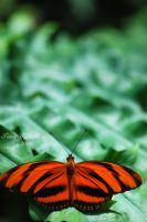 Butterfly conservatory - by ELaiNes-DarkRoom