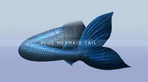Blue Mermaid Tail PNG Stock by Wesley-Souza