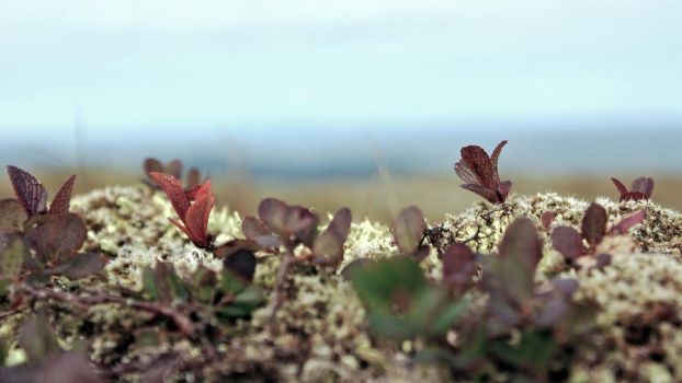 Norwegian Mountain Flora 1080p by messo85