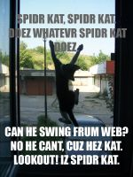 LOLCAT Caption Battle Entry by Sleams