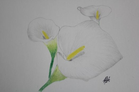 Calla Lilies by ToxiquenMaidez