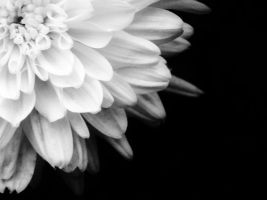 White Flower by Juandii