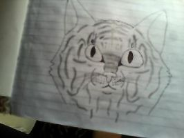 tiger drawing by misty-warriors