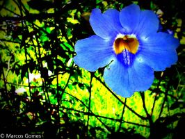 Blue Flower in Strong Colors by Monosashime