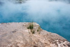 Yellowstone - 13 by grenadeh