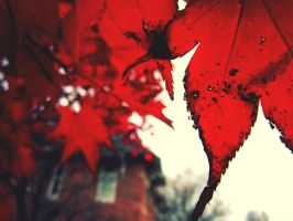 Autumn by Nebulously