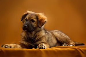 Puppy by DeingeL-Dog-Stock