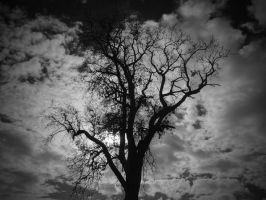 tree in the clouds by NiloDirf