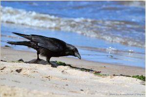 hungry bird on sea by brijome