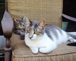 Yellow eyes a lazy summer day. by Selune13