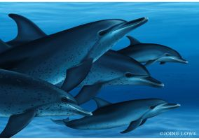 Atlantic Spotted Dolphins by Oracle88