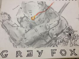 Gray Fox by AguilarX