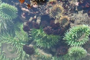 Tide Pools 9 by wolfstockphotos