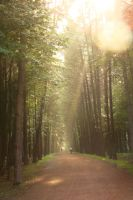 Forest road 1 by Panopticon-Stock