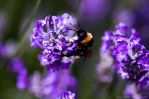 Buzzing with life by Stasia3833