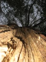 Tree Struck - Close up by Mercy-Angel