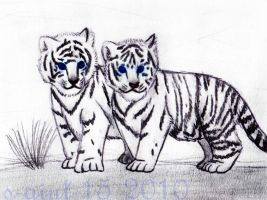 Baby White Tigers by theOrangeSunflower
