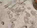 High Mountain Fossils 3 by tmulcahy