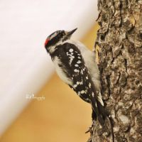 The Pecker by PhotographsByBri