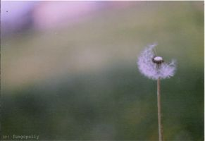 Pustblume by fungopolly