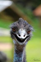 Emu Smile by carlusdarienus