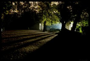 Park at night by Callogero
