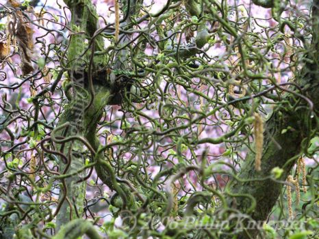 Tangled Vines by LordOfShades
