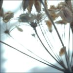 seeds and light by a-sullen-girl