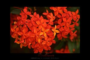FIREFLOWERS by micahgoulart