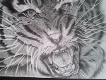 Tiger Done in Graphite 2 by michaelbryan