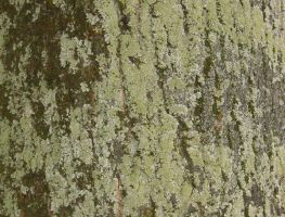 Bark with Moss and Lichen by tmm-textures