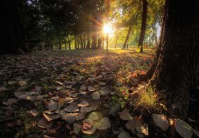 Tree-leaves-hdr by joelht74