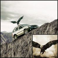 aguila toyota-foto final by helicoide
