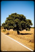 Tree by marcospiga